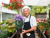 12 of the best business ideas for retirees